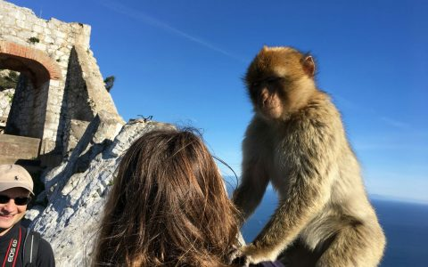 Monkey-Gilbraltar